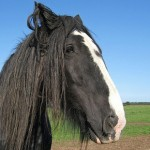 Writing about horses: surely ewe are joking?