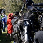 Writing about horses: nearly a mis-carriage
