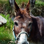 Writing about, er, donkeys! Bravo, Benjy