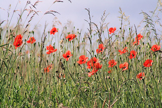 Remembrance Day: what should we write about it?