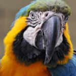 Why you should never trust a parrot…