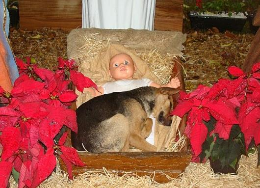 The Nativity with a modern twist