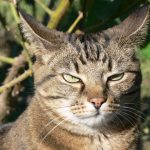 How a big bully cat got what he deserved – from a bird