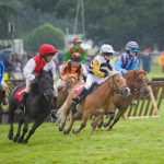 Horse racing humour – jokes from the final furlong